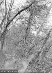 Yeovil, Pathway, Newtown Woods c.1955