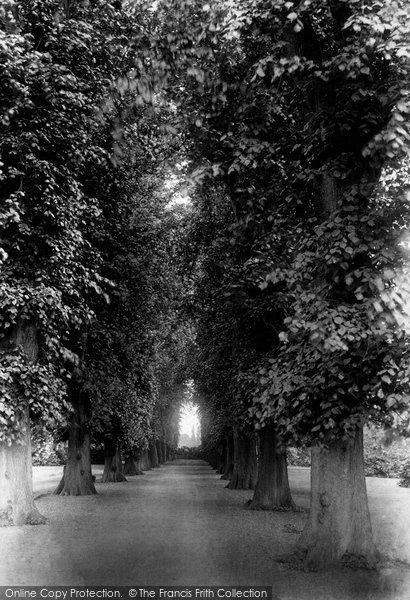 Photo of York, Bishopthorpe Palace Avenue 1893