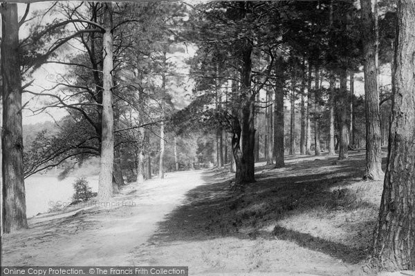 Photo of York Town, In The Woods 1895