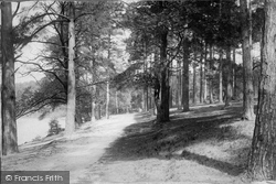 York Town, In The Woods 1895