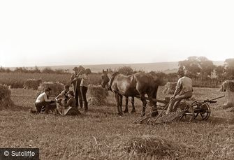 Farming Scenes